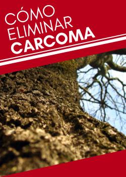 ¿Cómo eliminar la carcoma?