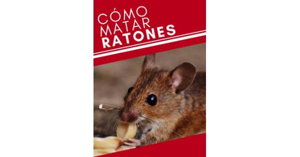 C mo matar ratones - Como matar ratones ...