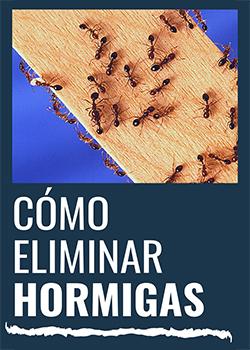 Te explicamos cómo eliminar hormigas