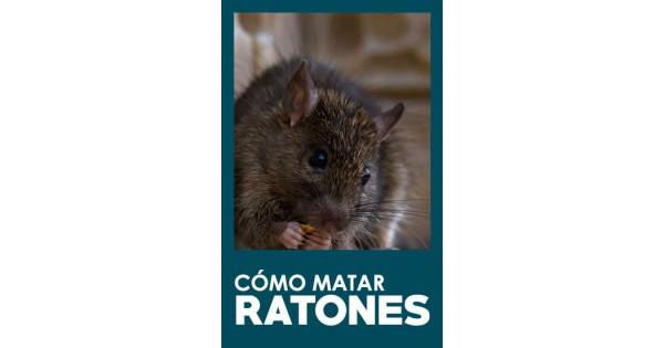 C mo matar ratones - Como eliminar ratones en el hogar ...