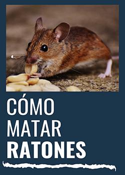 ¿Cómo matar ratones?