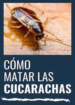 ¿Como matar las cucarachas?