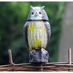 Buho espanta palomas