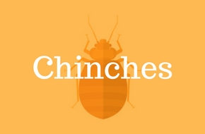 Fundas Anti Chinches