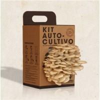 Kit Autocultivo Seta ostra
