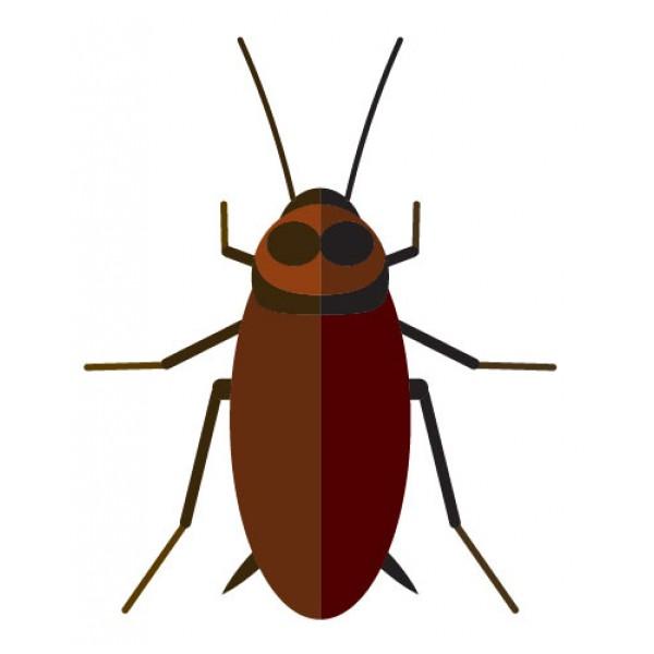 Insecticidas para cucarachas