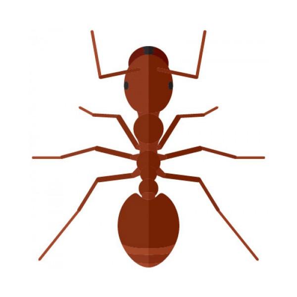 Insecticidas para hormigas y antihormigas