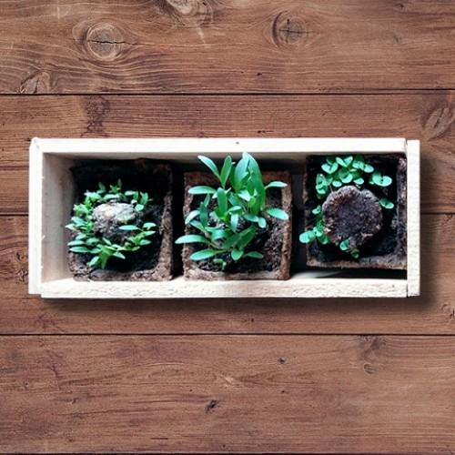 Semillas y Plantines